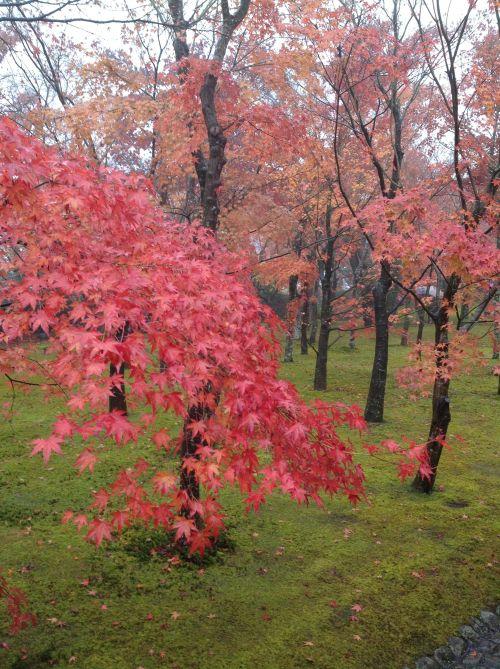 紅葉風景照 2