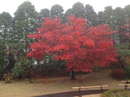 紅葉風景照 3