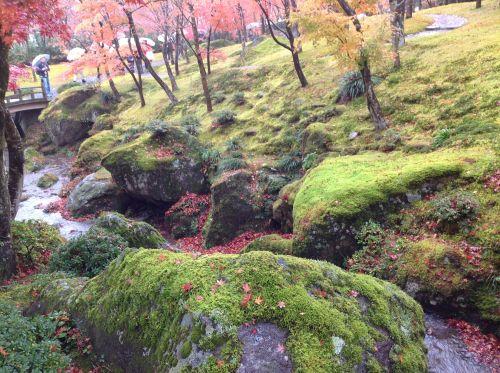 紅葉風景照 4