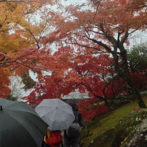 紅葉風景照 5