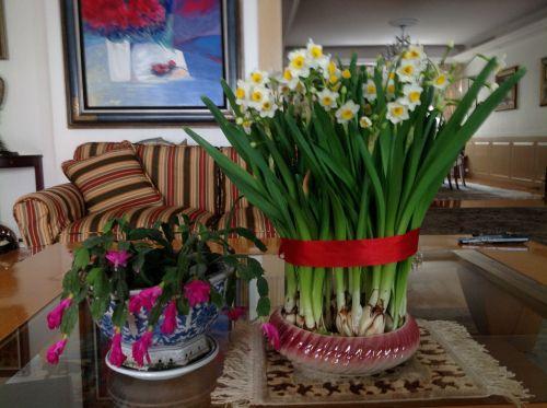 水仙花及蟹爪花