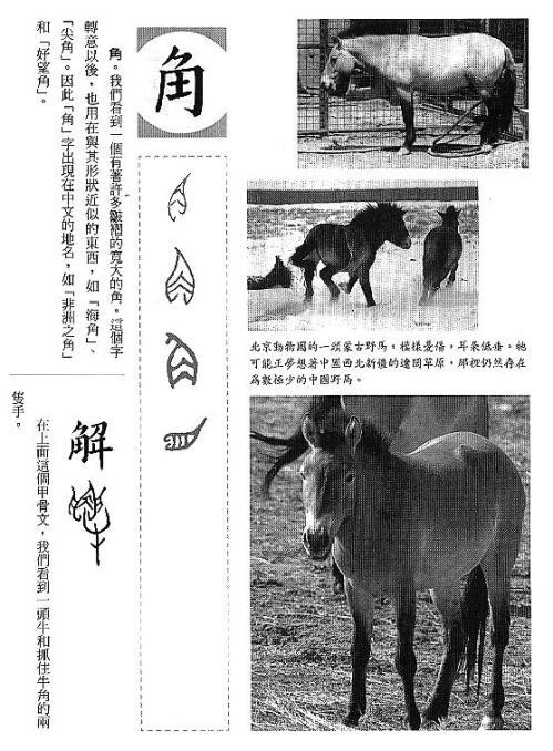漢字的故事:<家畜 ( 4-12 )>